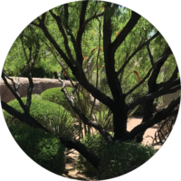 ehmaz-testimonial-tree